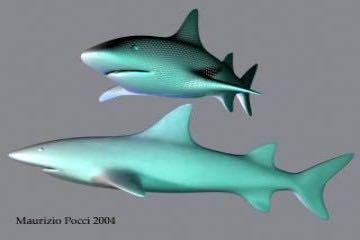 3ds Max ile Köpek Balığı Çizimi