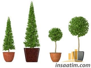 3 Boyutlu Buxus Bitkisi Çizimi (*max)
