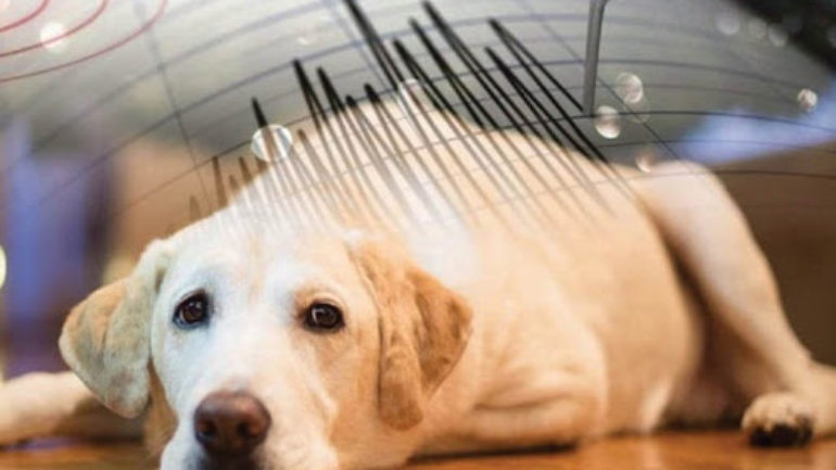 Hayvanlar Tsunamiden Nasıl Kurtuldu? Depremi önceden hissederler mi?
