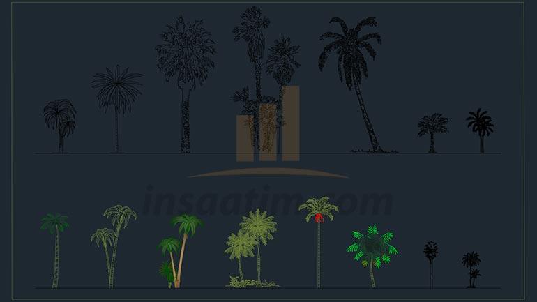 Dwg Palmiye Ağacı Çizimleri